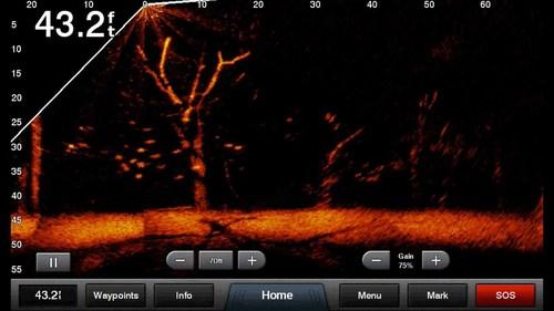 livescope2.jpg